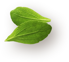 about leaf